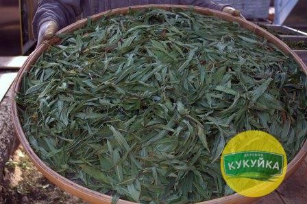 Иван-чай перед ферментацией