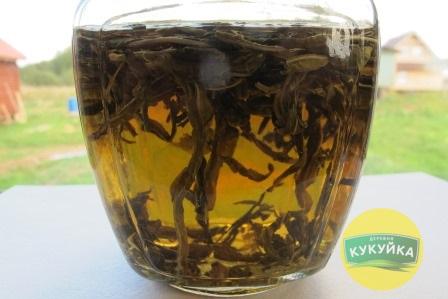 Зеленый листовой Иван-чай фото