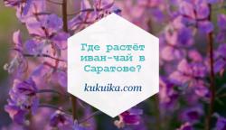 Где растёт иван-чай в Саратове?