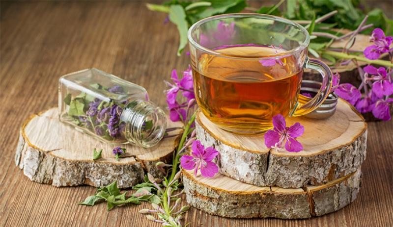 Иван чай история появления, расцвета, уничтожения и возрождения