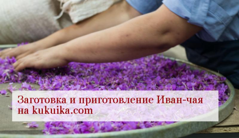 Иван-чай — заготовка и приготовление