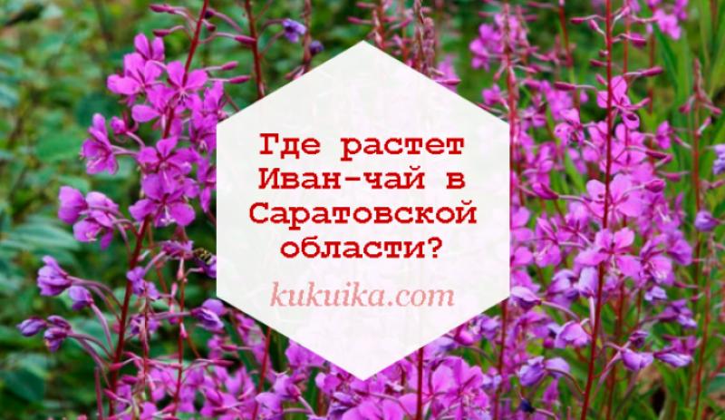 Где растет Иван-чай в Саратовской области?