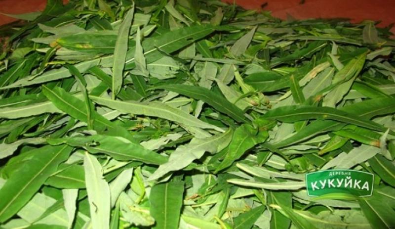 Иван чай для здоровья человека и его полезные свойства