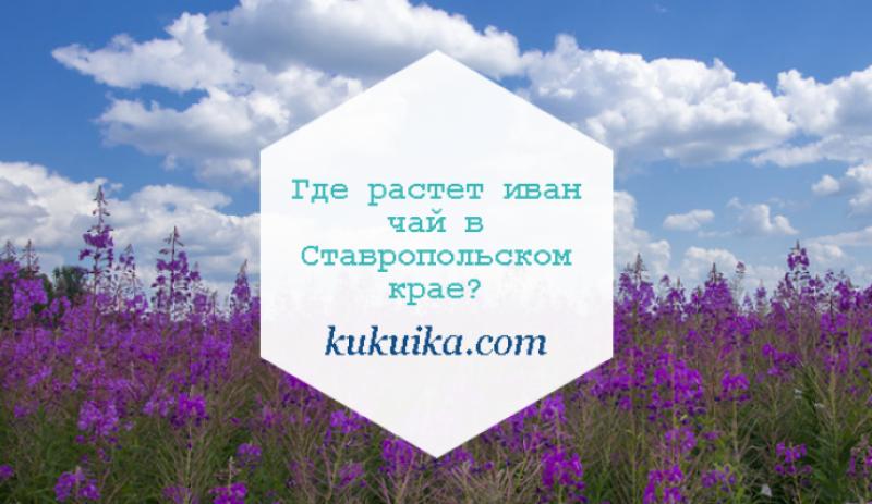 Где растет иван чай в Ставропольском крае?