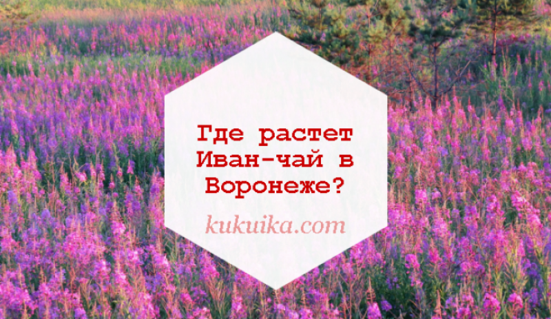 Где растет Иван-чай в Воронеже
