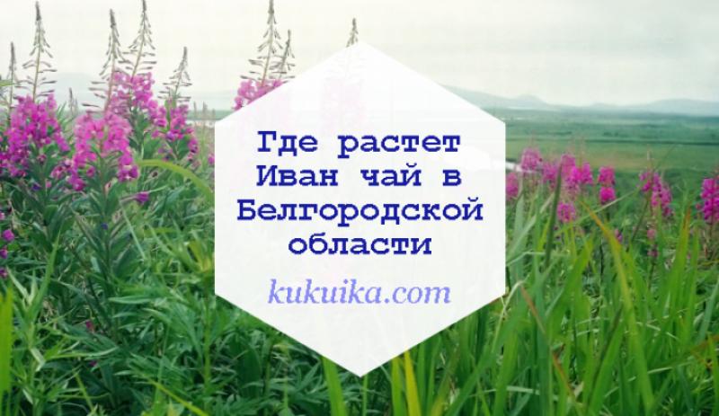 Где растет Иван чай в Белгородской области