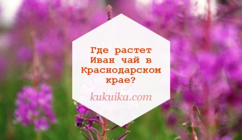 Где растет Иван чай в Краснодарском крае?