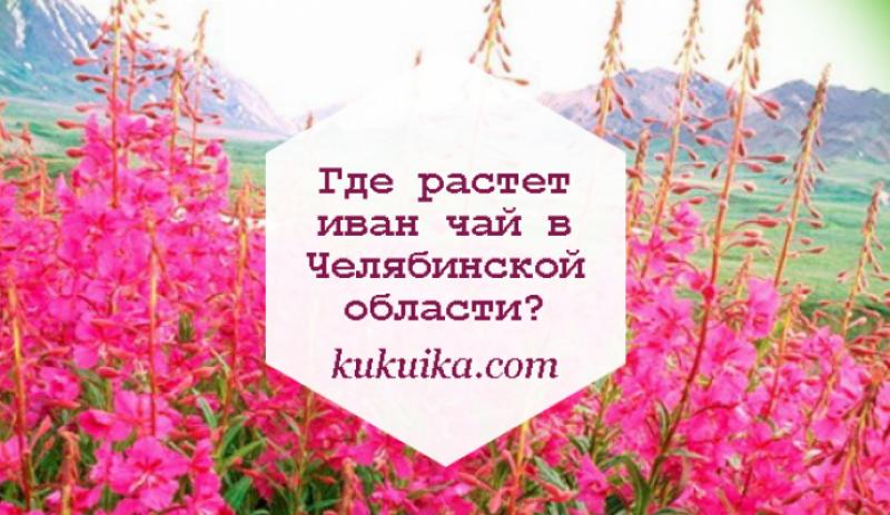 Где растет иван чай в Челябинской области?
