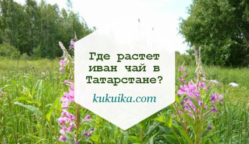 Где растет иван чай в Татарстане?