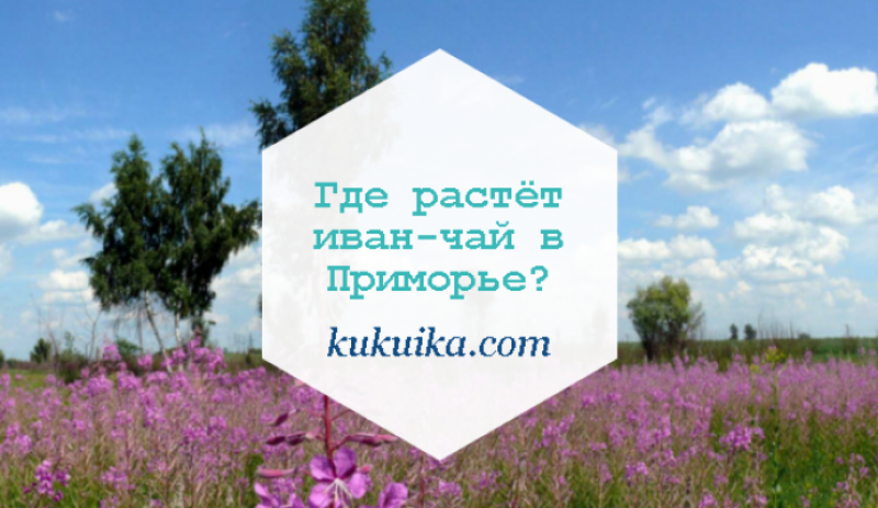 Где растёт иван-чай в Приморье?