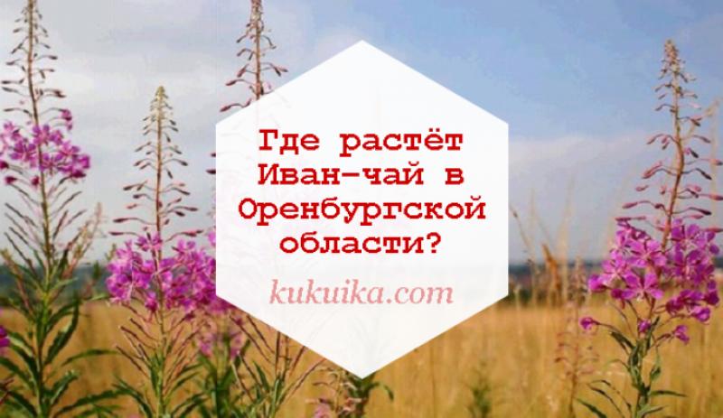 Где растёт Иван–чай в Оренбургской области?