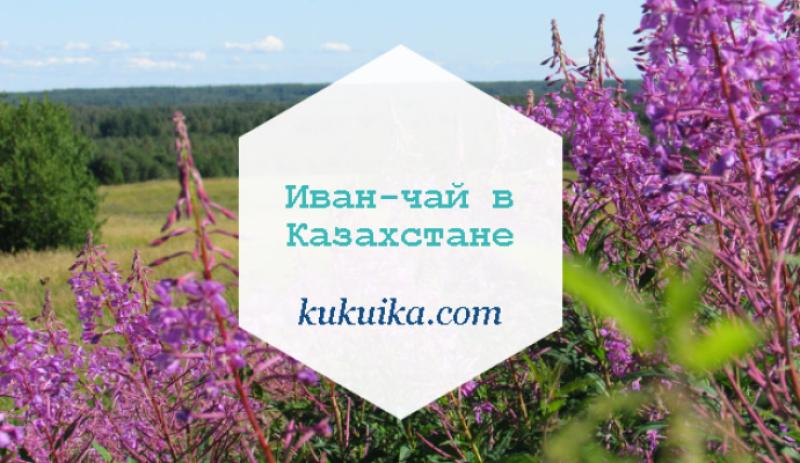 Иван-чай в Казахстане