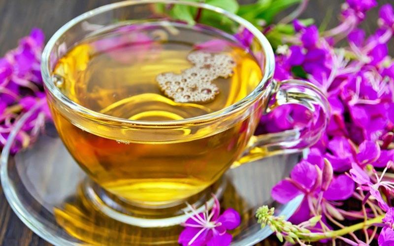 Иван чай польза и вред для организма